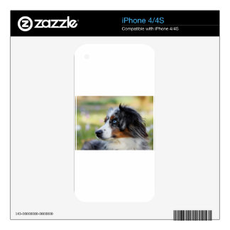 australian-shepherd iPhone 4S decal