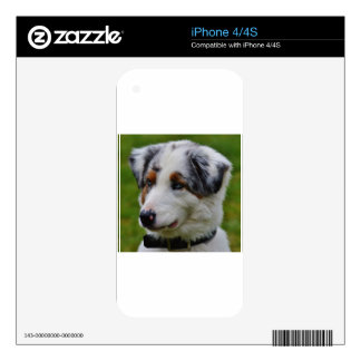 Australian Shepherd iPhone 4S Decal