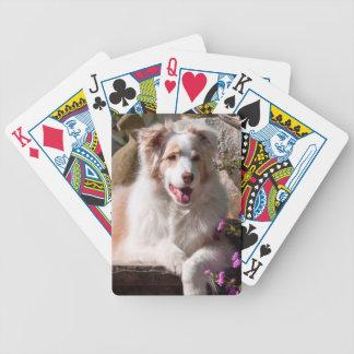 Australian Shepherd lying on garden stairs Bicycle Playing Cards