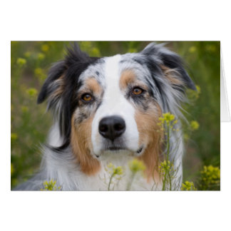 Australian Shepherd Missing You Card