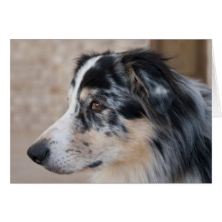 Australian Shepherd Mix Close Up Photograph Card