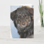 Australian Shepherd Mix Photo Card