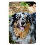 Australian Shepherd Modern Photo Premium Magnet