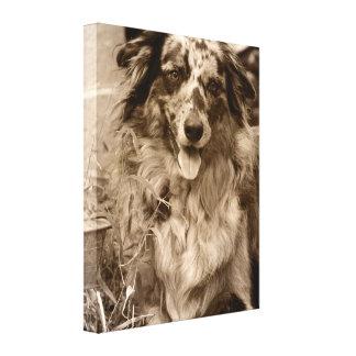 Australian Shepherd Modern Portrait Canvas Print