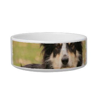 Australian Shepherd Pet Bowl Cat Water Bowls