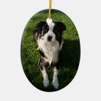 Australian Shepherd Photo  Ornament