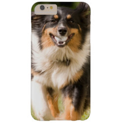 Case-Mate Barely There iPhone 6 Plus Case with Australian Shepherd Phone Cases design