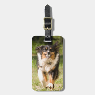 Australian Shepherd Playing With Ball Tags For Bags