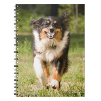 Australian Shepherd Playing With Ball Spiral Notebook