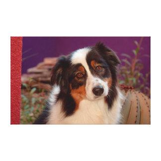 Australian Shepherd portrait Canvas Print