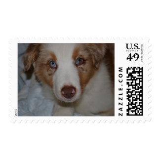 Australian Shepherd Postage Stamp
