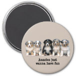 Australian Shepherd Puppies Magnet