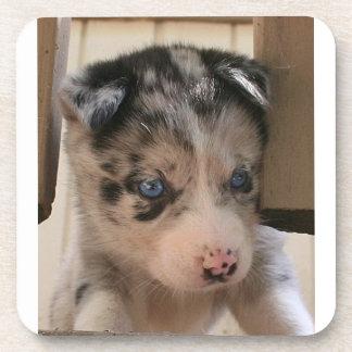Australian Shepherd Puppy Drink Coaster