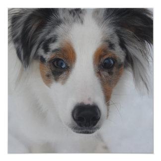 """Australian Shepherd Puppy Invitation 5.25"""" Square Invitation Card"""