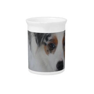 Australian Shepherd Puppy Pitcher