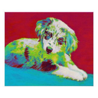 australian shepherd puppy-red poster
