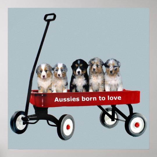Australian Shepherd Pups In Wagon Print