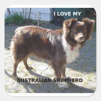 australian shepherd red tri love w pic square sticker