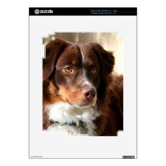 Australian Shepherd Skin For The iPad 2