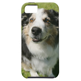 Australian Shepherd smiling at camera iPhone 5 Cases