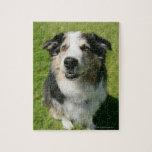 Australian Shepherd smiling at camera Jigsaw Puzzles