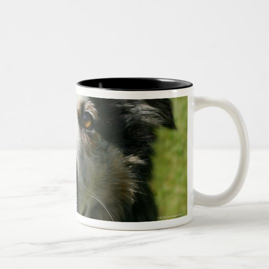 Australian Shepherd smiling at camera Two-Tone Coffee Mug