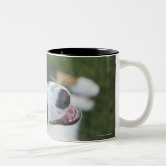 Australian Shepherd standing on hind legs Two-Tone Coffee Mug