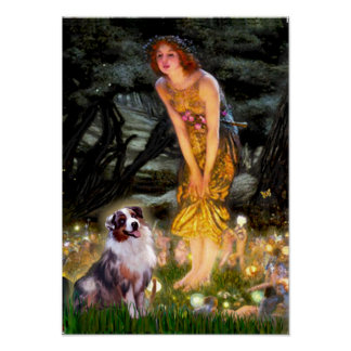 Australian Shepherd Tri2 - Midsummer s Eve Poster