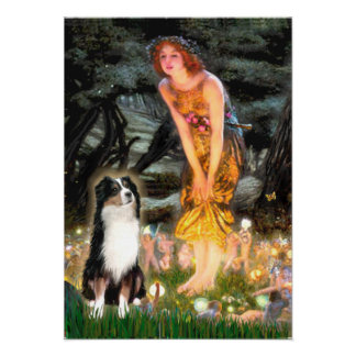 Australian Shepherd (Tri2)-Midsummers Eve Poster
