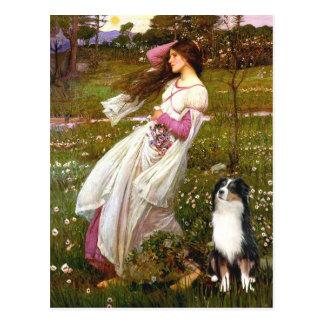 Australian Shepherd (Tri) - Windflowers Postcard