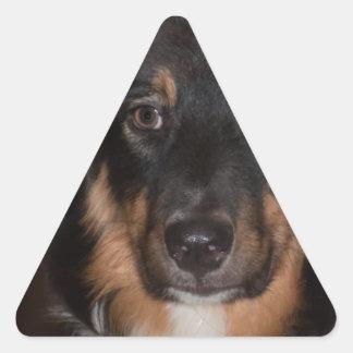 Australian Shepherd Triangle Sticker
