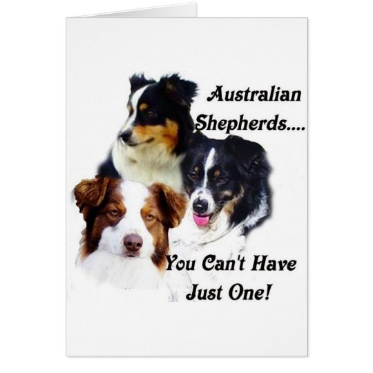 Australian shepherds card