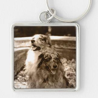 Australian Shepherds Modern Photo Keychain