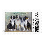 Australian Shepherds - Pirate and daughters Postage Stamp