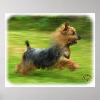 Australian Silky Terrier design Poster
