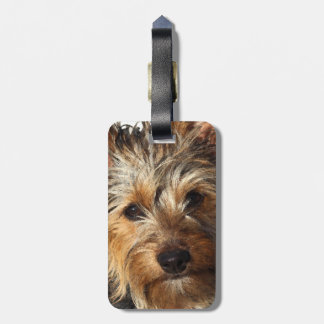 Australian Silky Terrier Travel Bag Tag