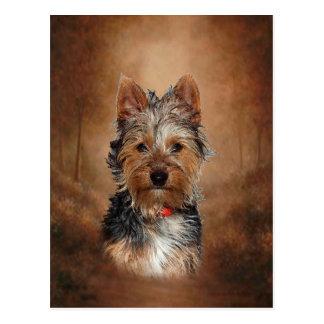 Australian Silky Terrier Postcard