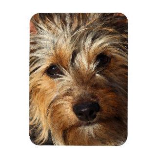 Australian Silky Terrier Rectangular Photo Magnet
