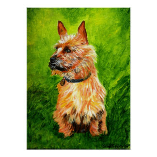 Australian Terrier Dog Portrait Poster