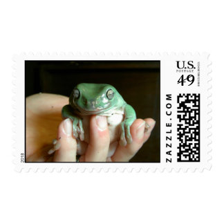 Australian Tree Frog Postage Stamp