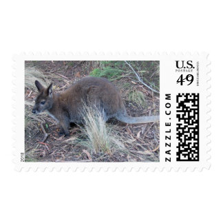 Australian Wallaby Postage Stamps