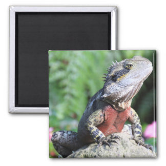 Australian Water Dragon 2 Inch Square Magnet