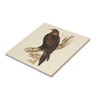 Australian Wedge Tailed Eagle. Huge Bird of Prey. Ceramic Tile