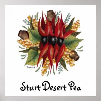 Australian Wildflowers - Sturt Desert Pea Poster