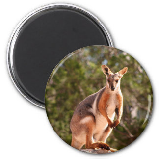 Australian yellow-footed rock wallaby 2 inch round magnet