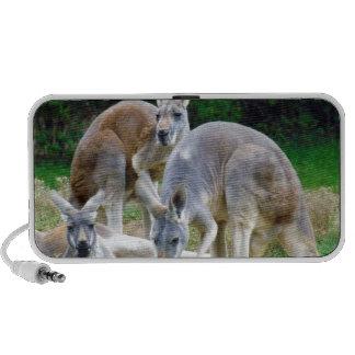 Australiano KangaROOS que se relaja en el Sun Laptop Altavoz