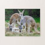 Australiano KangaROOS que se relaja en el Sun Rompecabezas