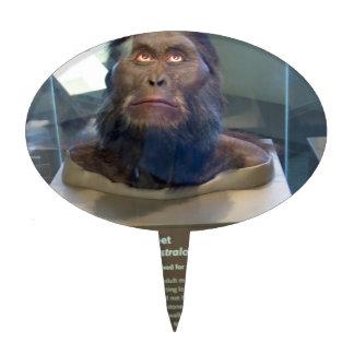 Australopithecus afarensis; museum exhibit. cake pick