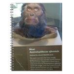 Australopithecus afarensis; museum exhibit. spiral note books