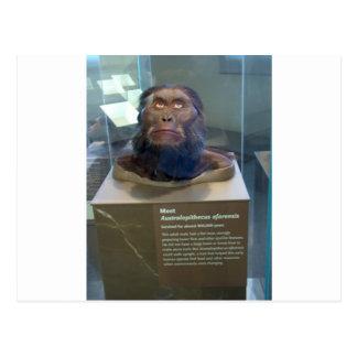 Australopithecus afarensis; museum exhibit. post card